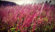 Tidak ada Deskripsi dan Tempat Khusus, Rumput Mei, Belum bisa jadi Obyek Wisata